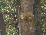 Squirrel on the tree.jpg
